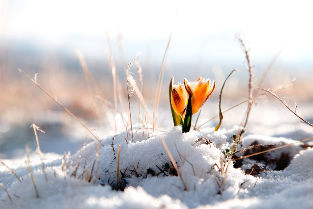 Happy First Day Of Spring The East Coast Might Get Another Snowstorm Next Week Winter Flowers Spring Nature Nature Wallpaper