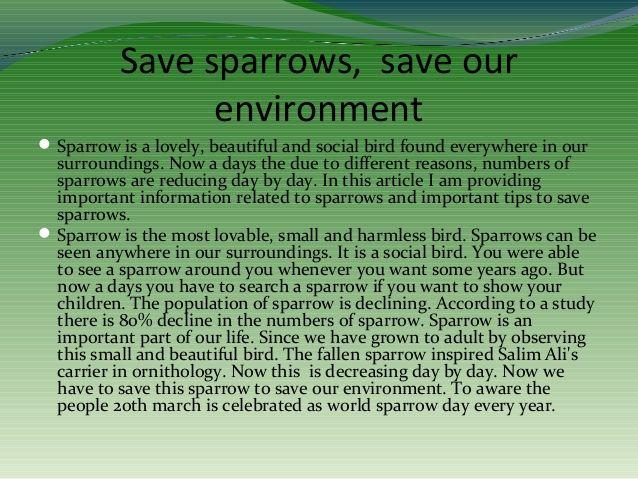 Save birds essay