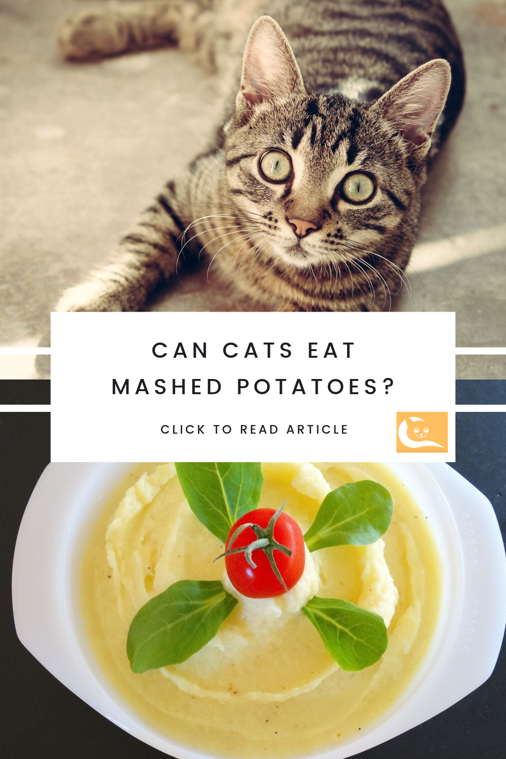 Can Cats Eat Mashed Potatoes? Eat, Popular side dishes