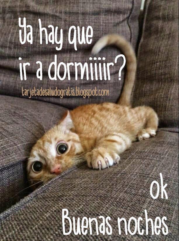 Tarjeta Divertida De Buenas Noches Imagenes Con Frases Para Comp Memes De Animales Divertidos Frases Divertidas Sobre Animales Humor Divertido Sobre Animales