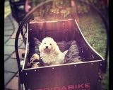 cuccia per cani FRIDABIKE 3 ruote...Wish list
