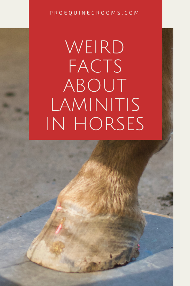 Weird facts about laminitis in horses. | Horse Health - Hooves ...