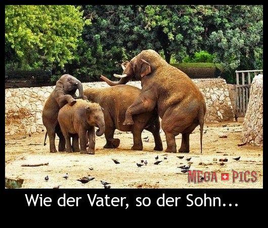 wie der vater, so der sohn - wwwgapics.ch. lustige bilder