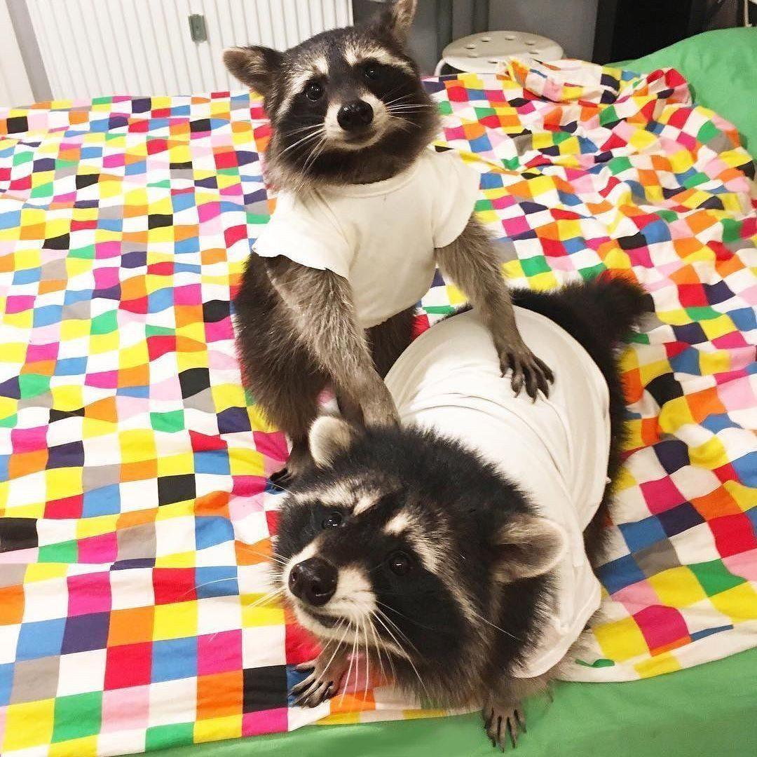 Диалоги Adorable cute animals, Cute animals, Animals