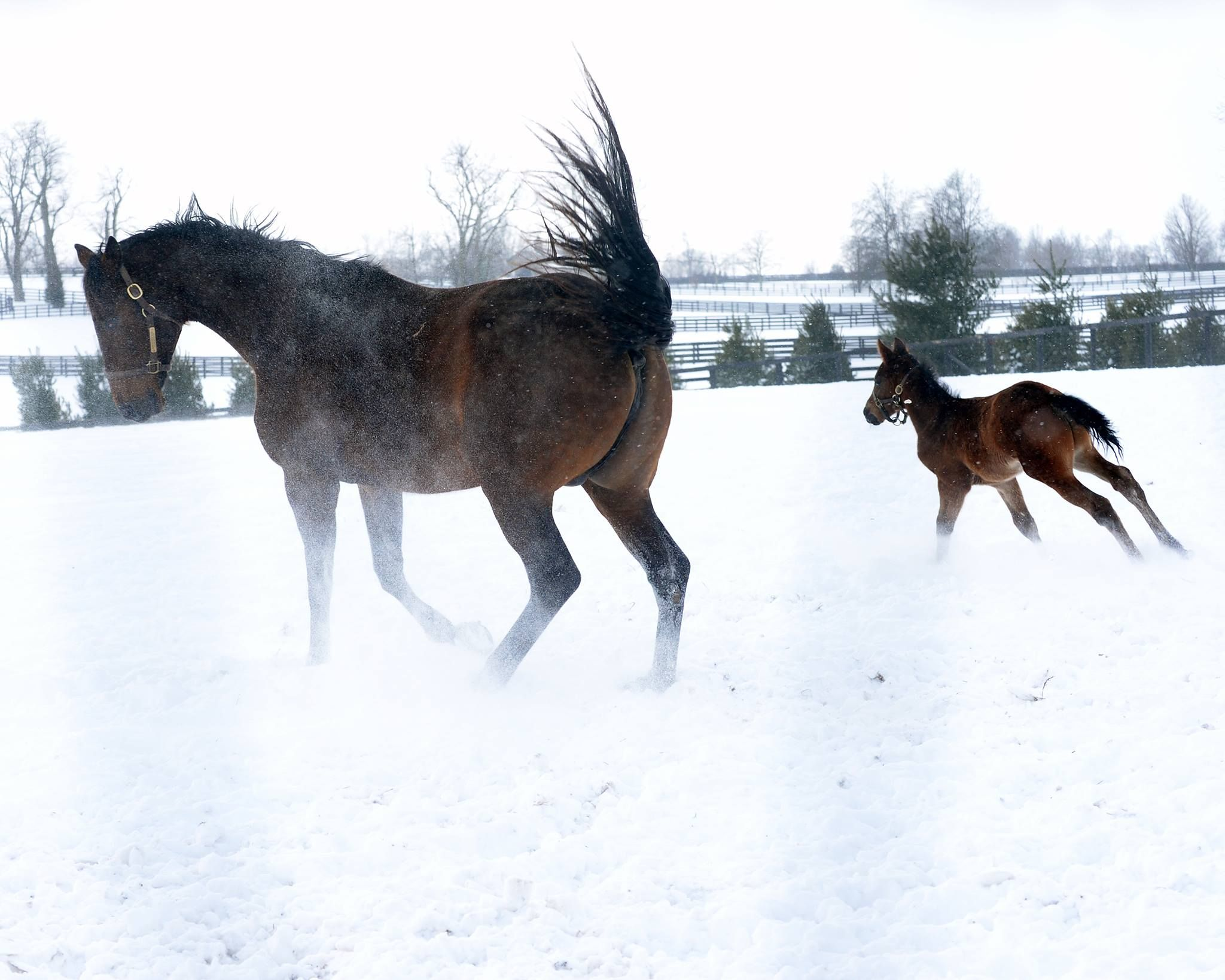 2015 colt by Bellamy Road and his dam, Colona