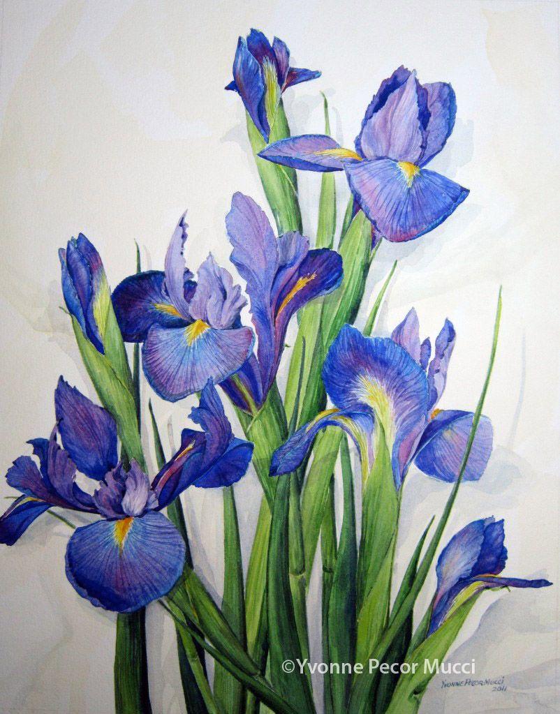 Purple Iris For Alicia Iris Painting Flower Art Floral Painting