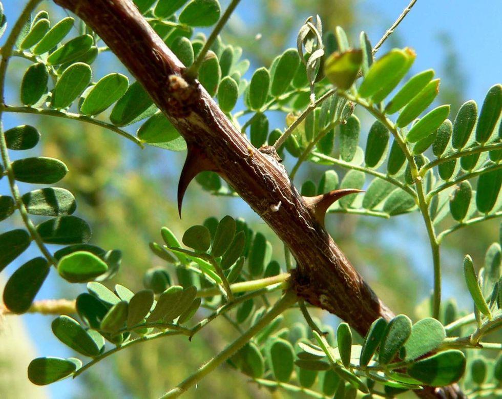 Diese 9 Pflanzen bringen dich durcheinander   – Botanicals to cast in bronze