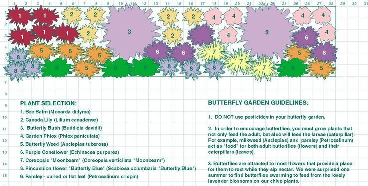 Planning A Butterfly Garden   Plant A Nectar Smorgasbord To Lure The  Greatest Variety Of Butterflies