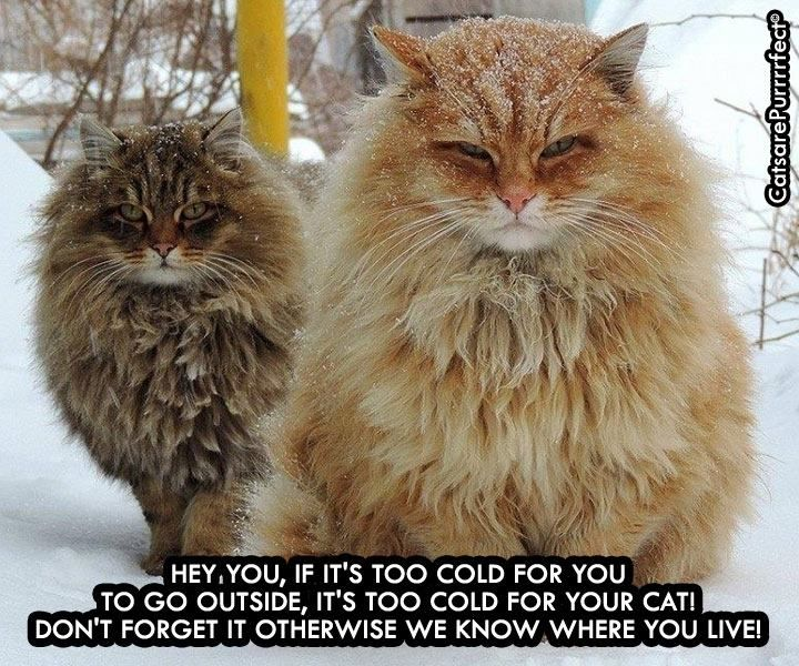 It's cold please keep kitty inside ^_^