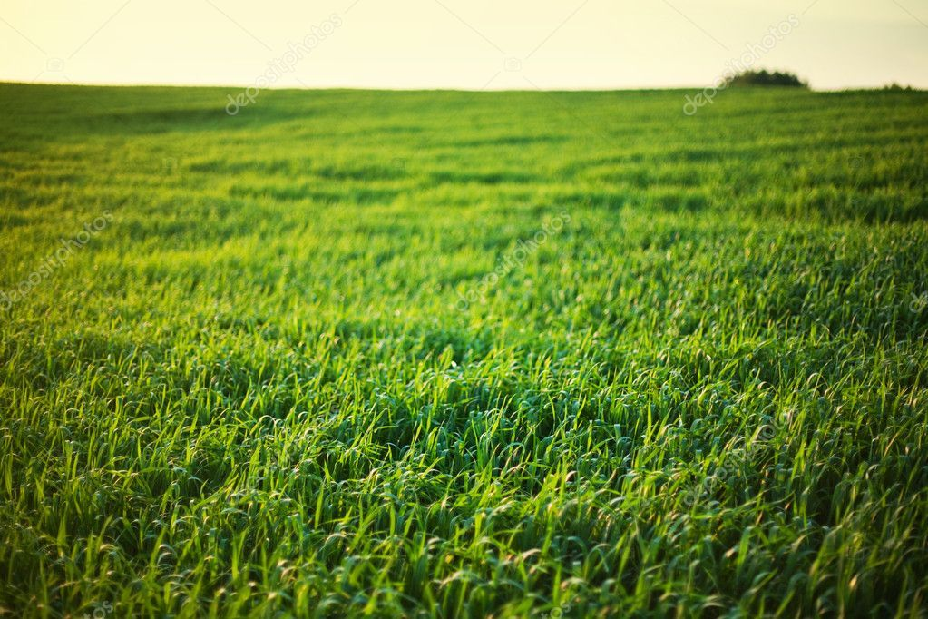 Green grass and summer sky royalty free stock photos