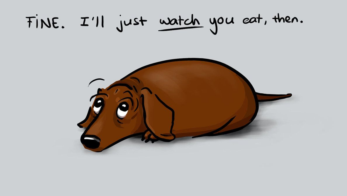 The Dreaded Look Known By All Dachshund Owners Is Captured So