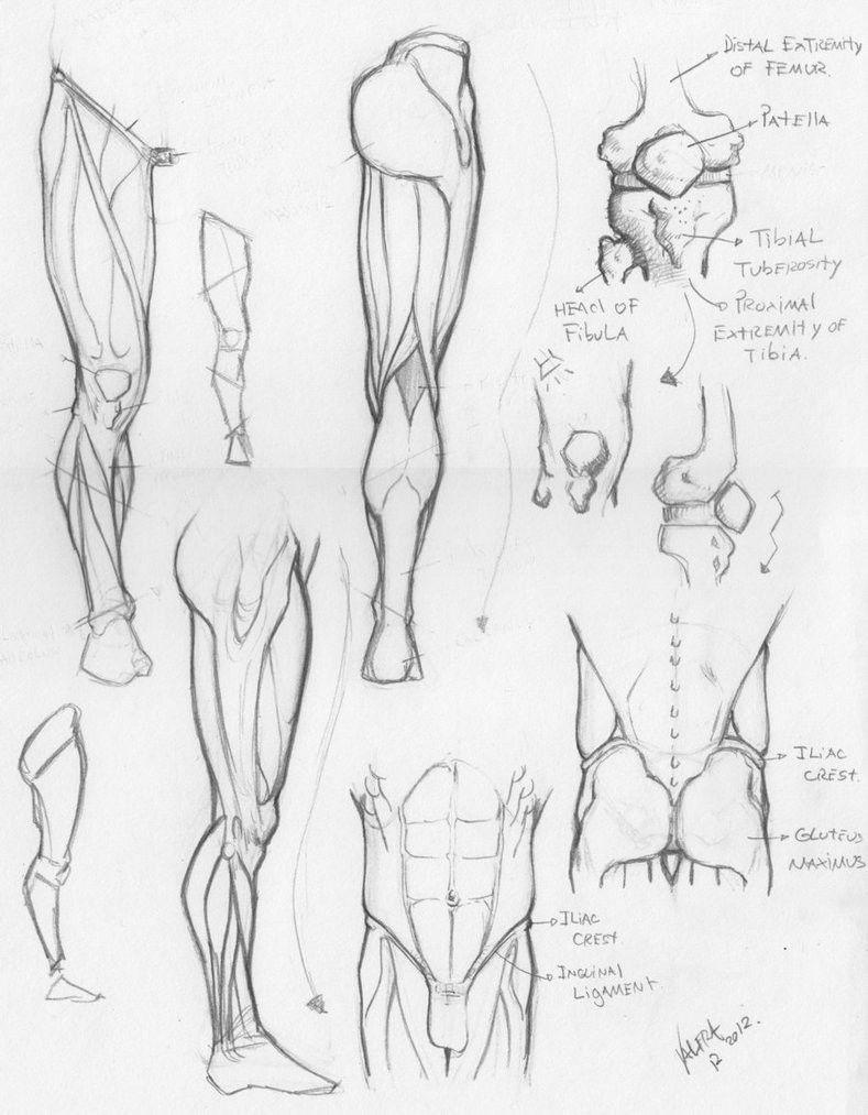 Pin de Derek Glen en life drawing | Pinterest | Anatomía, Piernas y ...