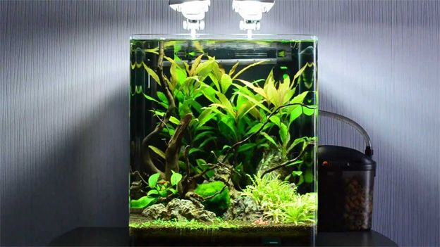 Best Fish For 10 Gallon Tank Shrimp Tank Nano Aquarium Aquarium