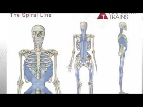 Tom Myers Anatomy Trains Pdf Reader | Myofascial therapy | Pinterest