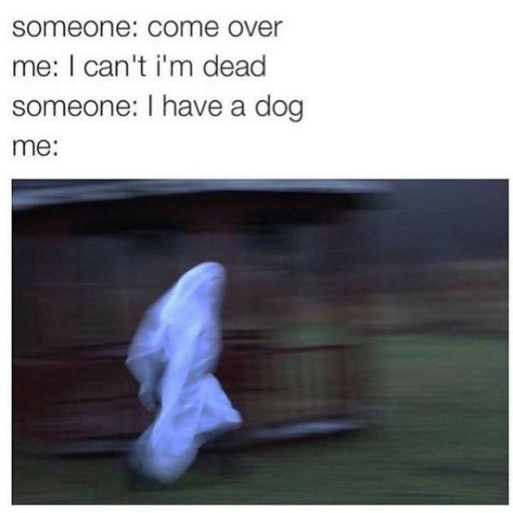 "Best Funny Dogs 101 Best Funny Dog Memes to Make You Laugh All Day 101 best funny dog memes - ""Come over."" 10"