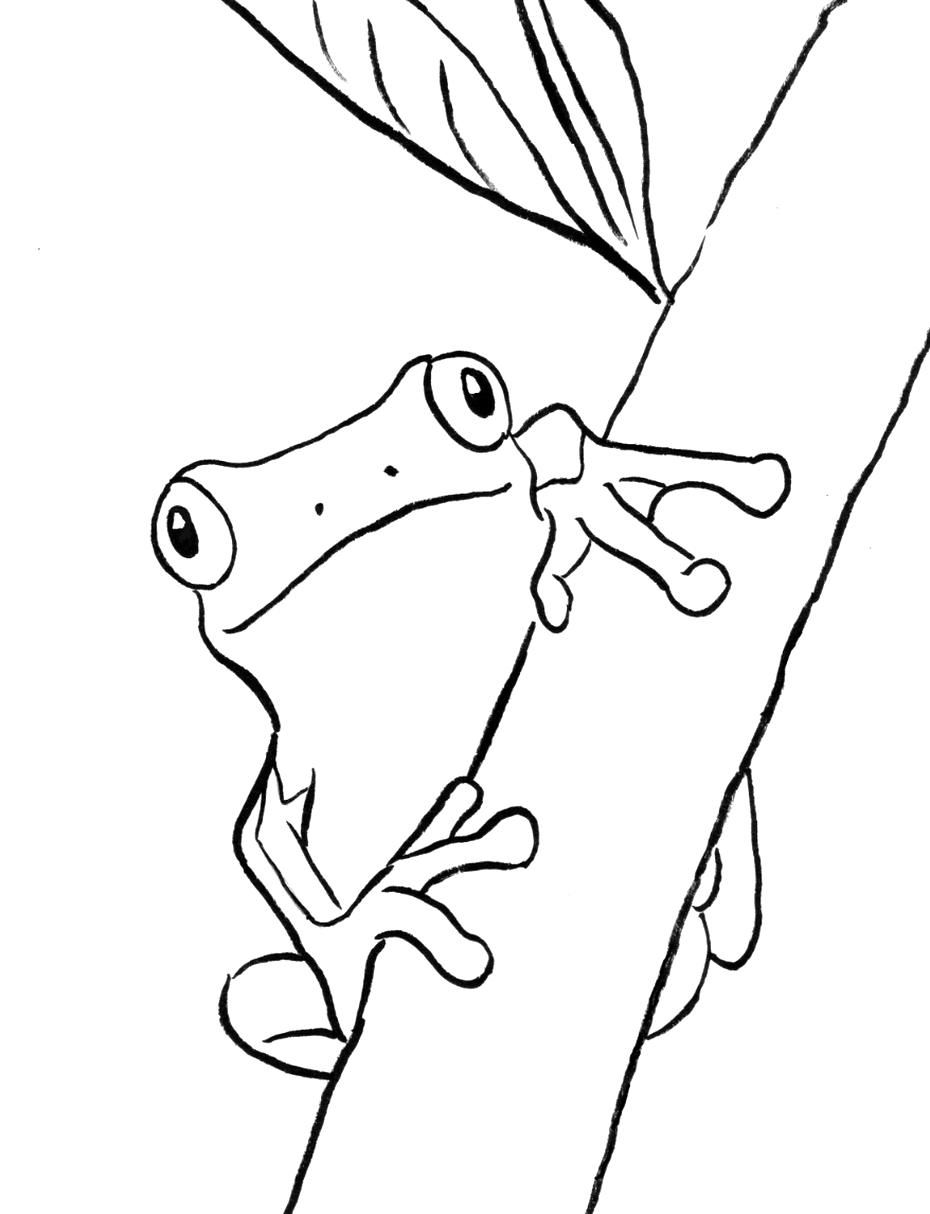 Coloring Rocks Frog Coloring Pages Coloring Pages Animal Coloring Pages