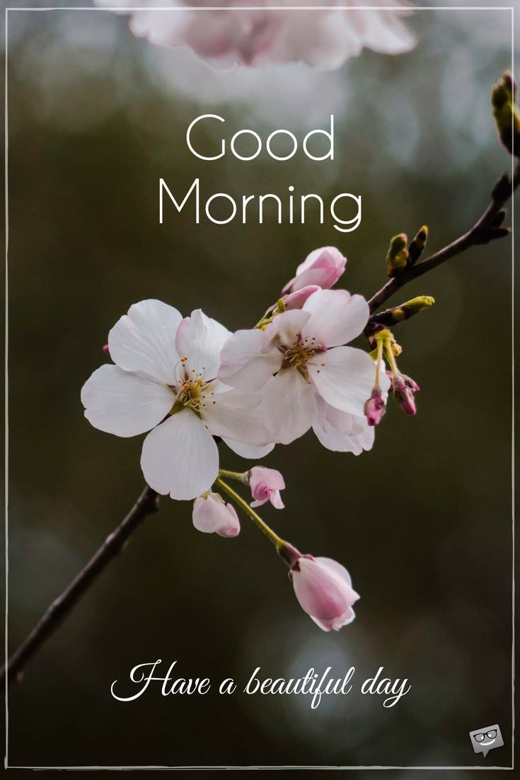 Fresh Inspirational Good Morning Quotes for the Day | Good