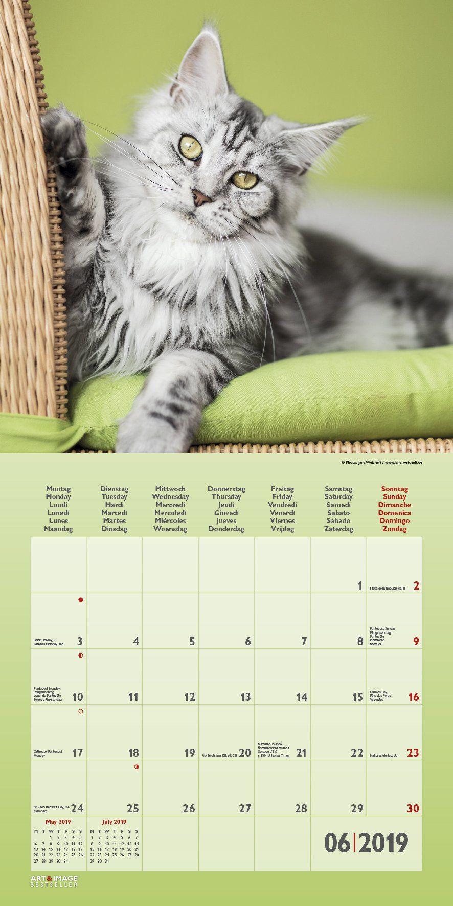 Katzen 2019 Broscha Renkalender Katzen Renkalender Brosch Calendario