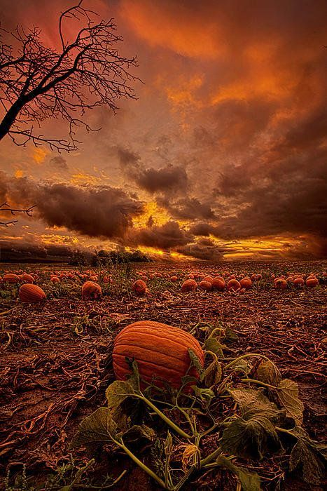 Waiting For The Great Pumpkin Art Print by Phil Koch #fallseason