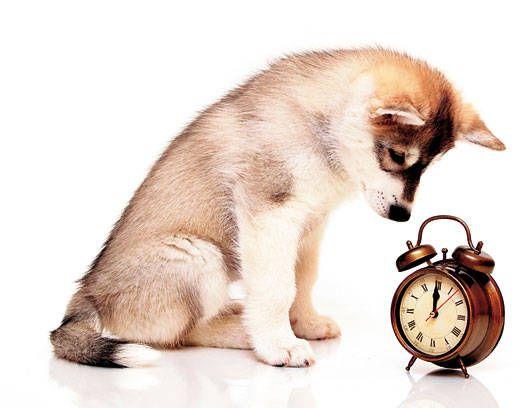 Su Mascota Tambien Necesita Horarios Entretenimiento Estampas Mascotas Perros Adiestramiento Canino