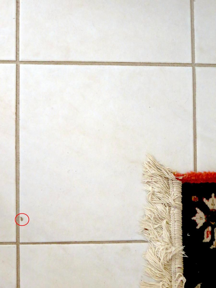 How To Repair A Chipped Tile With Epoxy And Paint Tile Repair Ceramic Tiles Tile Refinishing