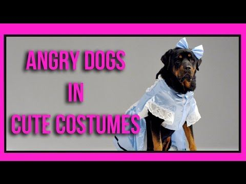 Resourceful Dogs Youtube Funny Funny Dogs Dogs Dog Training
