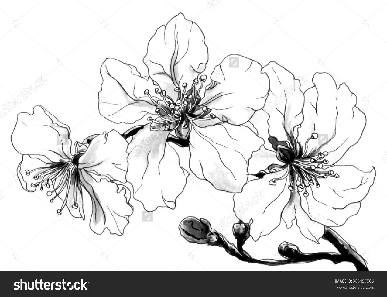 Fleurs Tropicales Amandier En Fleurs Isolé Sur Fond Blanc