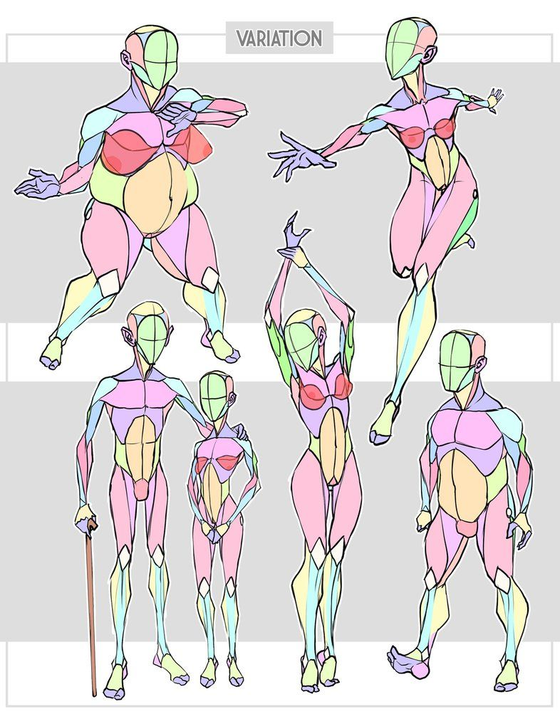 simplified anatomy variations by sycra.deviantart on, Muscles