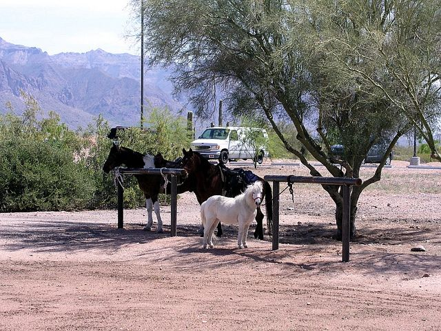 Horses on the hitching post at Apache Junction Public Library.