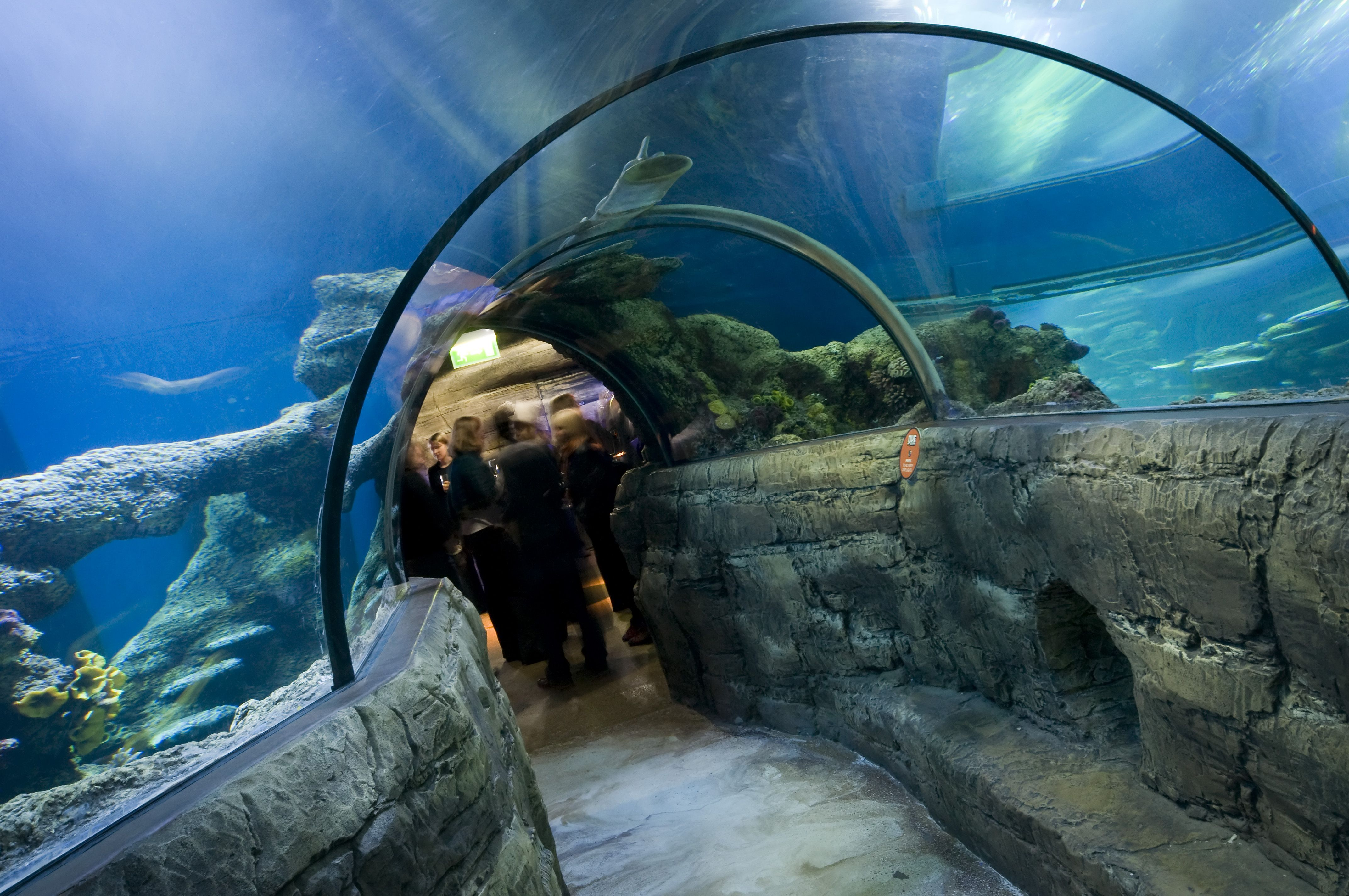 Delve Deep Into The Sea Life London Aquarium At A After Thailand Et Ticket Ocean World Only Adult Dark Event Where You Can Enjoy All Its Beauty Without Any Screaming Kids