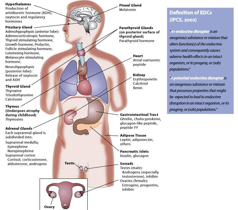 The Endocrine System Refers To The Collection Of Glands Of An