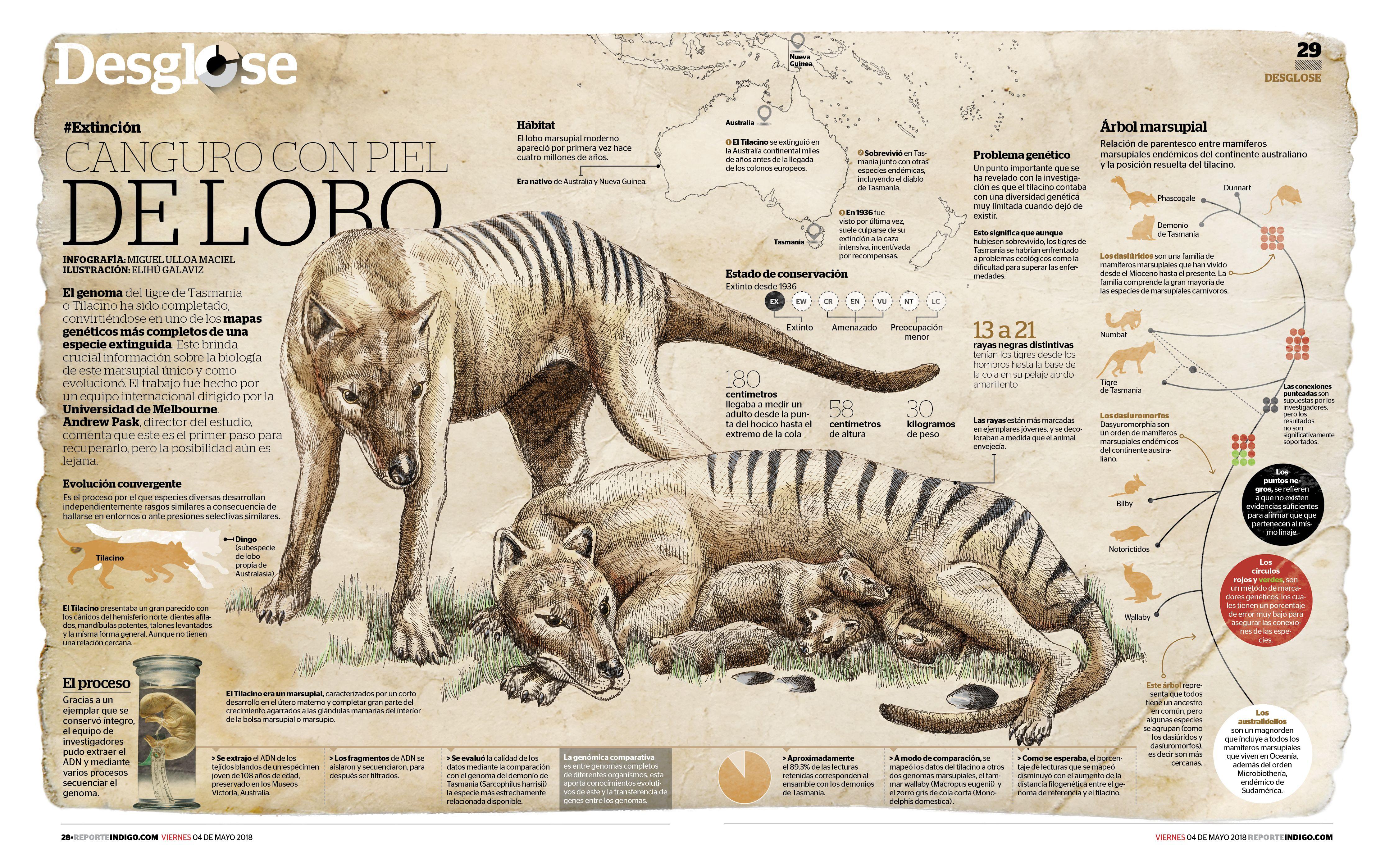 Pin De V E C O En Salvaje Tigre De Tasmania Animales Extintos
