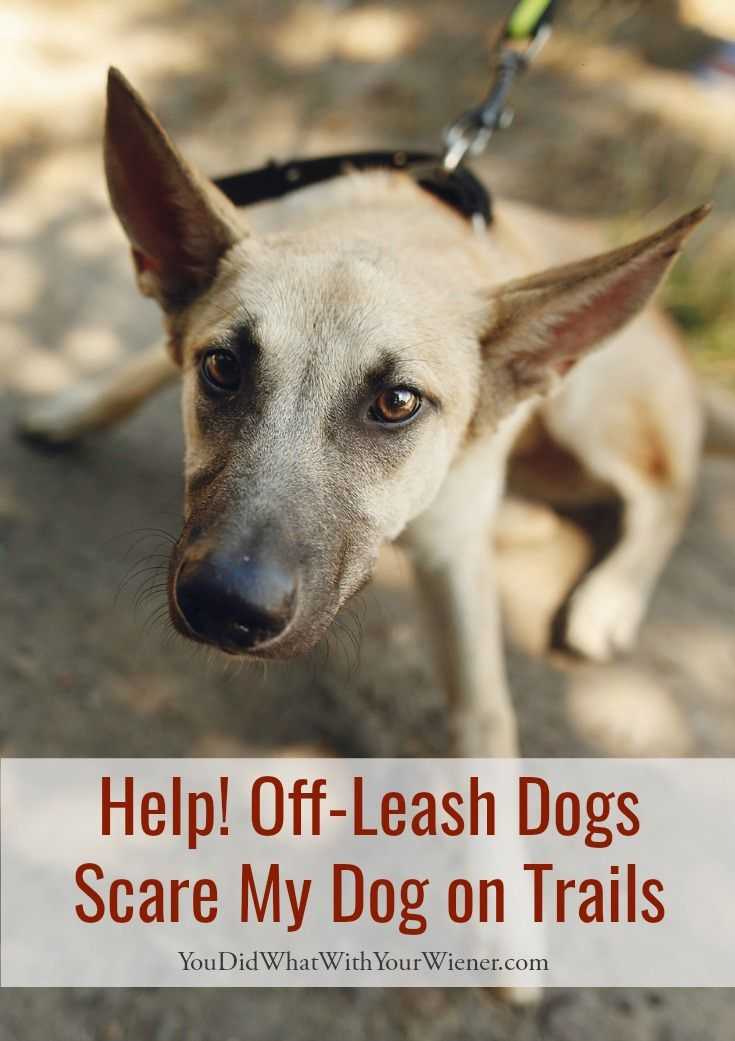 Help Off Leash Dogs Scare My Dog On Trails Reactive Dog Dog