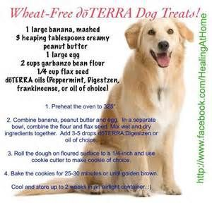 Dogs And Doterra Bing Images Essential Oils Dogs Oils For Dogs Doterra Oils