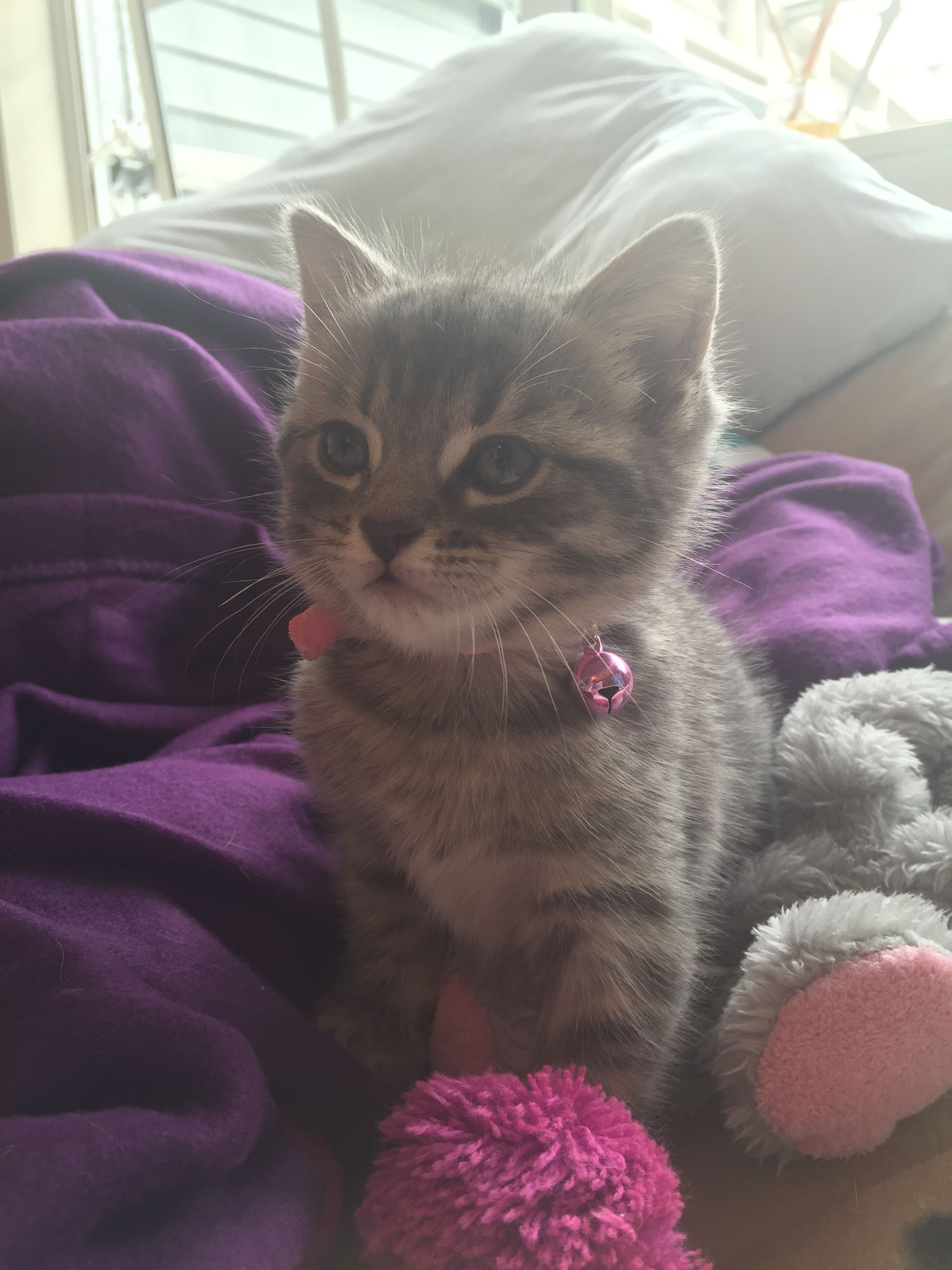 Pin By Gurol On Pawshake New Zealand Cats Cute Cats Cats All About Cats