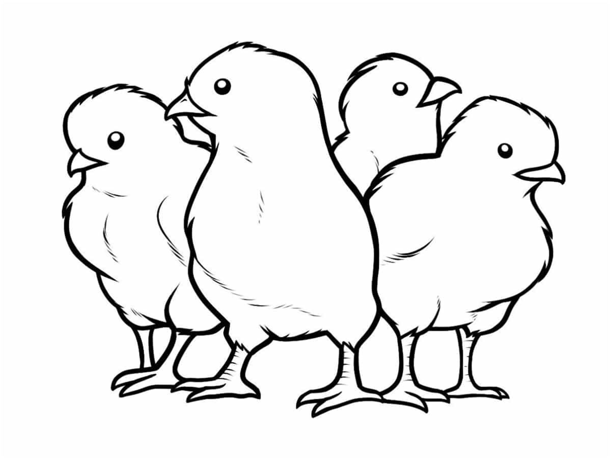 coloriage poussin #PoussinColoriage | Baby chicks, Animal drawings, Cool coloring pages