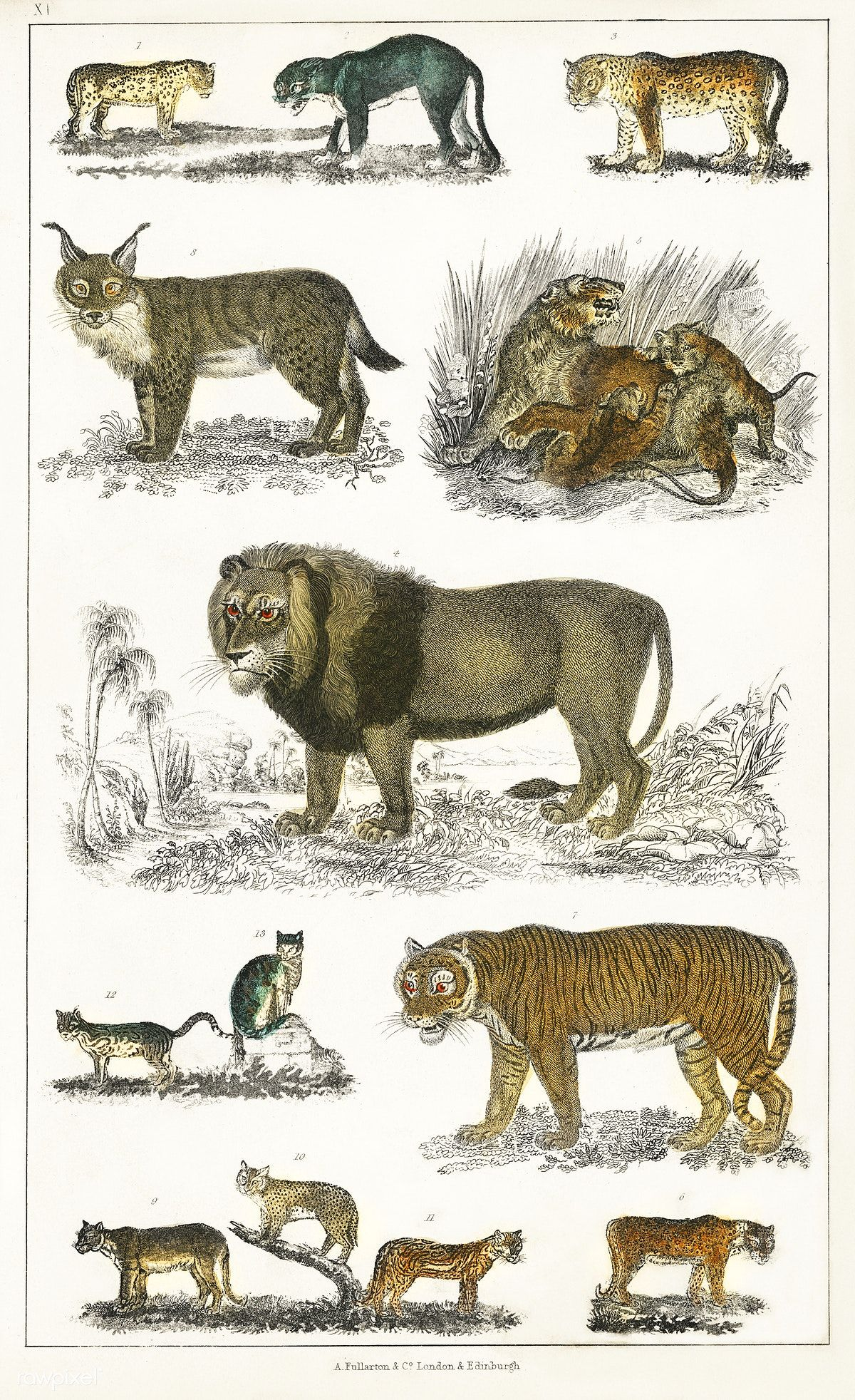 Animals in history