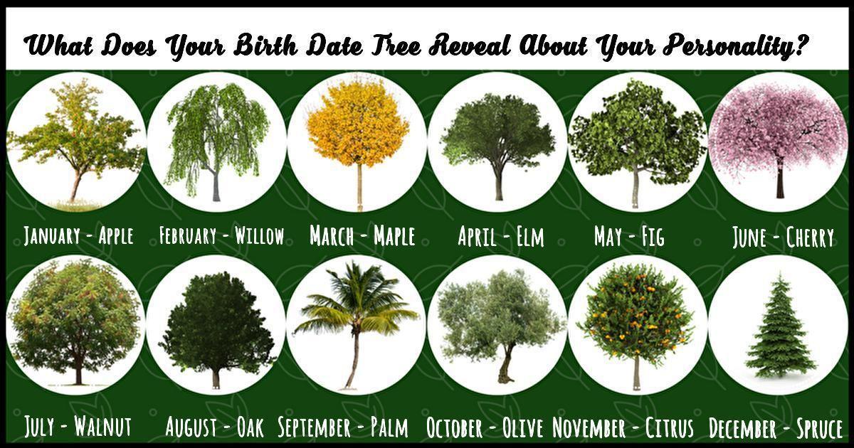 Birth Tree Birth flowers, Birth month, Flower names