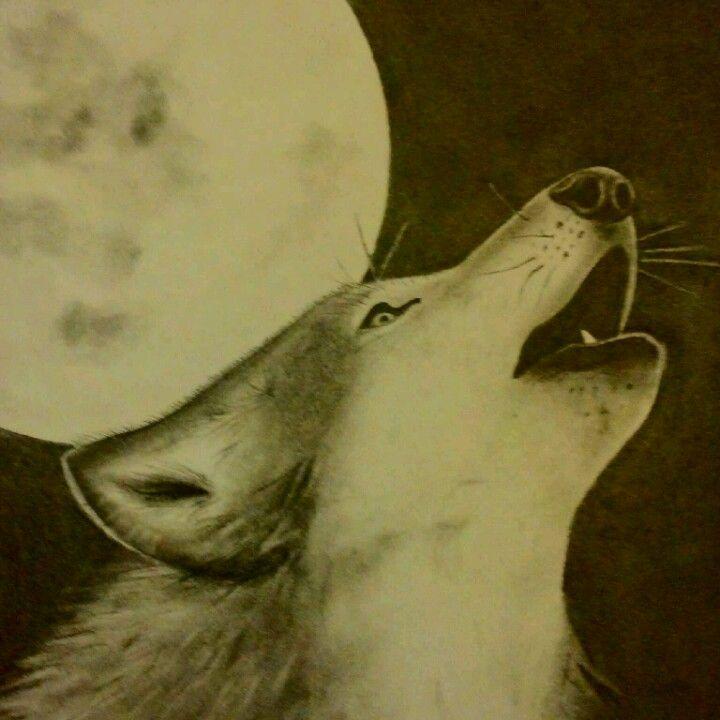 Wolf - graphite on bristol