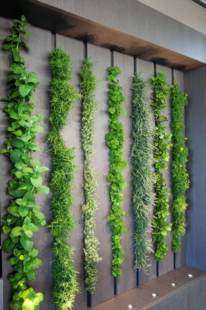 This living wall in a kitchen can be used as an indoor