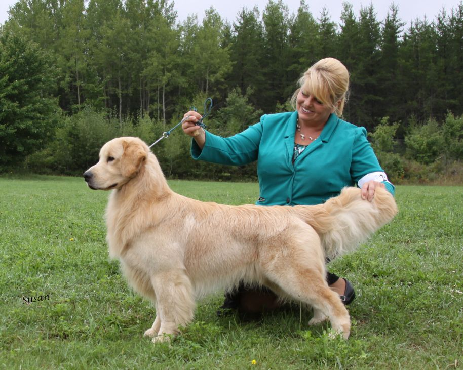 Pin By Judith Geyer On Dogs Golden Retriever Golden Retriever Puppy Dog Show