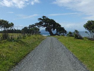 Pohutukawa Baum auf der Coromandel Halbinsel, Wanderreise - Sidetracks.de