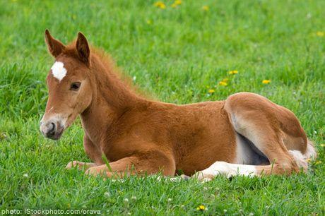 Disney Family Recipes Crafts And Activities Cute Baby Horses Baby Horses Horses