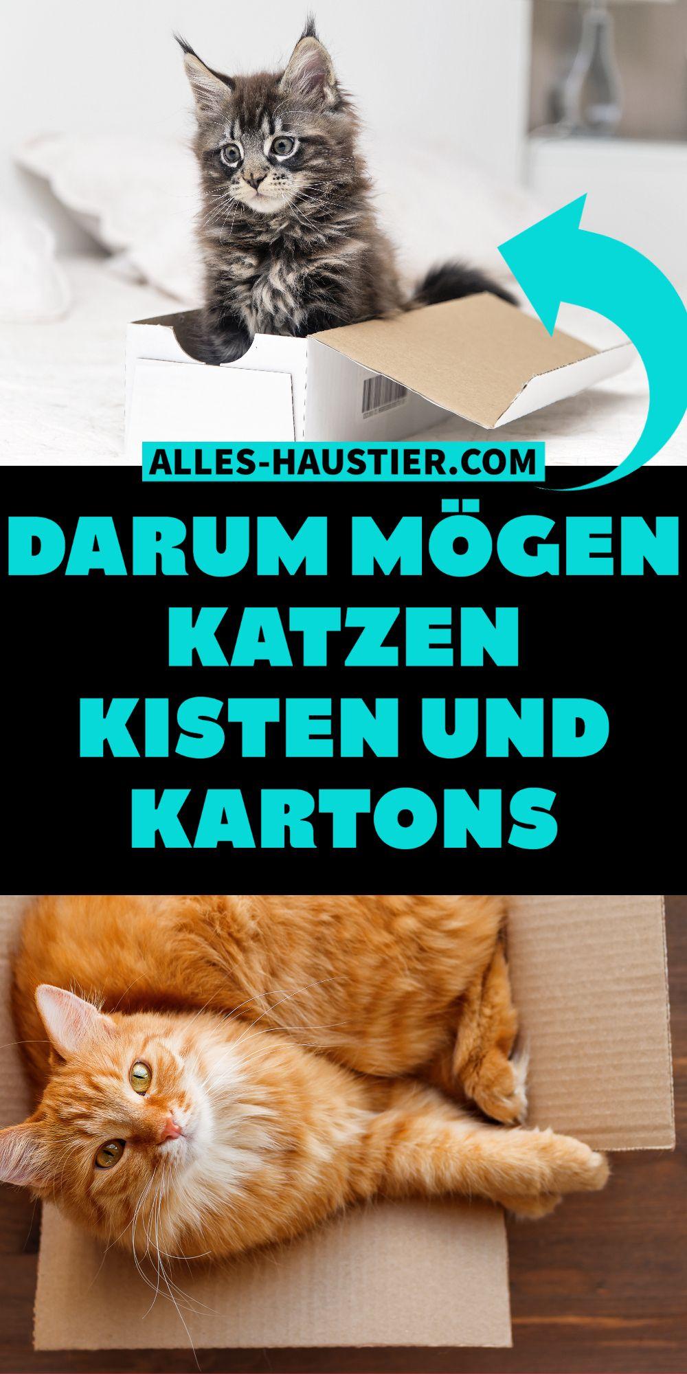 Warum Mögen Katzen Kartons