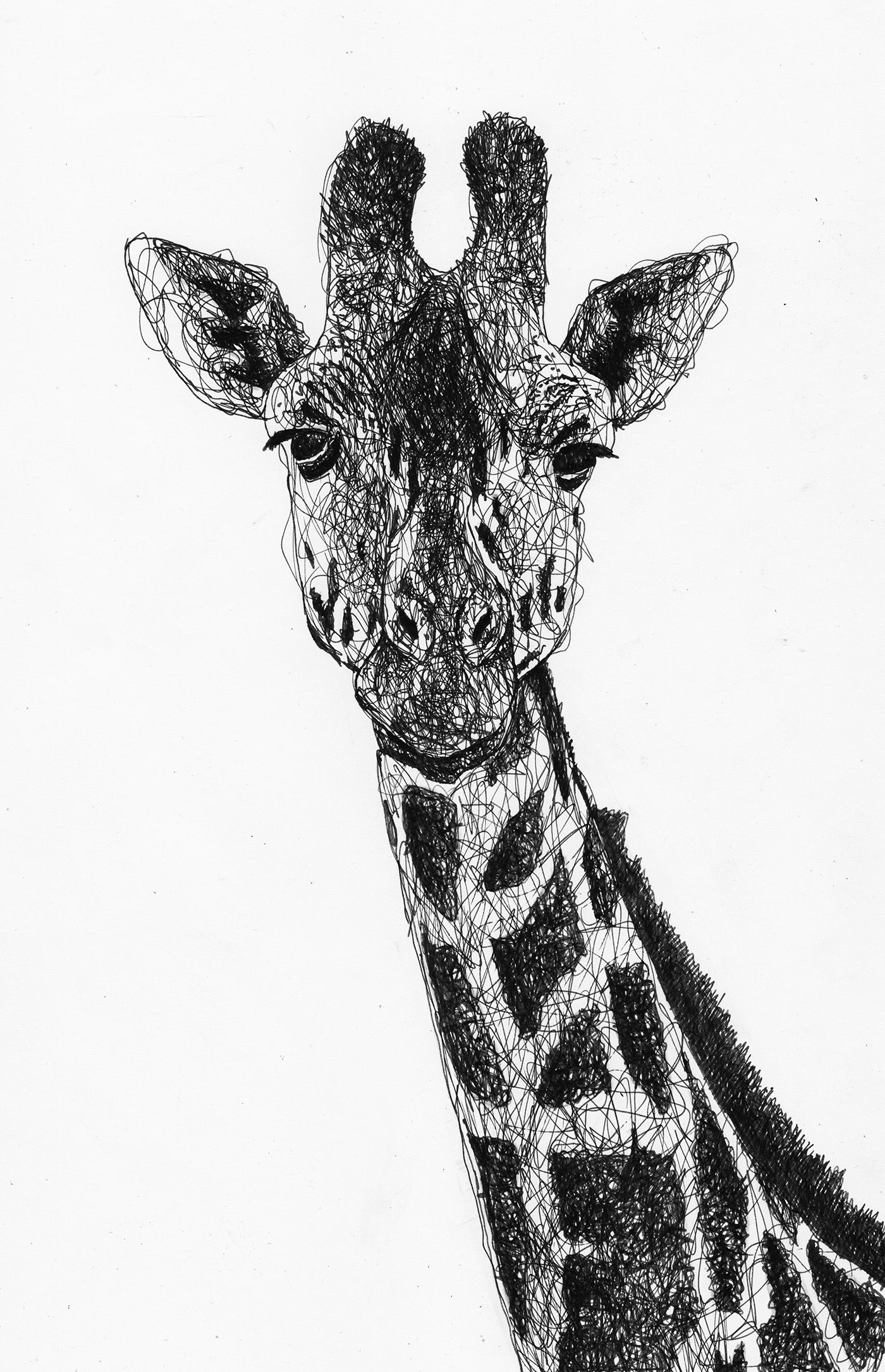 Scribble drawing of a giraffe by filip walczak scribbled
