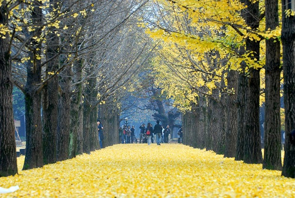 Autumn In Nami Island South Korea Places I D Like To Go Pinterest South Korea Korea And