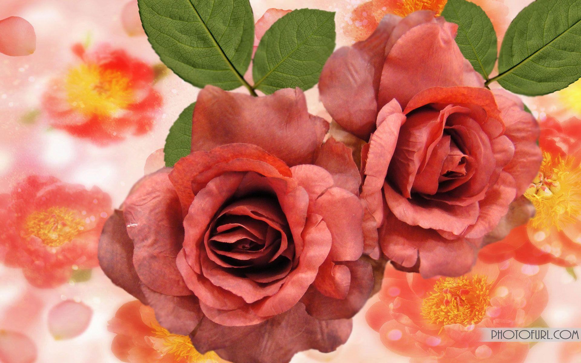 Beautiful red flower image hd wallpaper wallpaper wonderful life beautiful red flower image hd wallpaper wallpaper izmirmasajfo