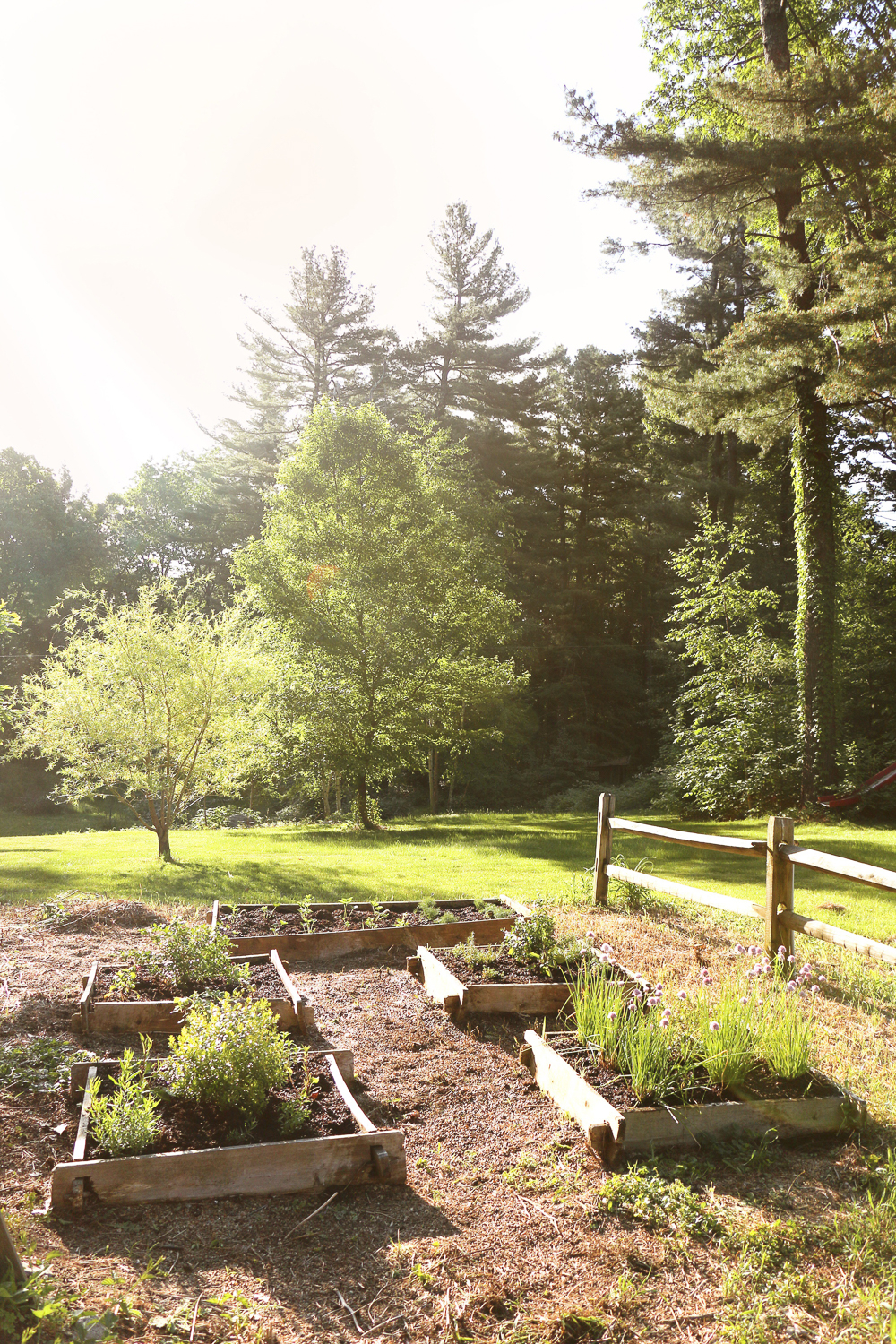 Reclaiming the Vegetable patch. An easy makeover | Easy ...