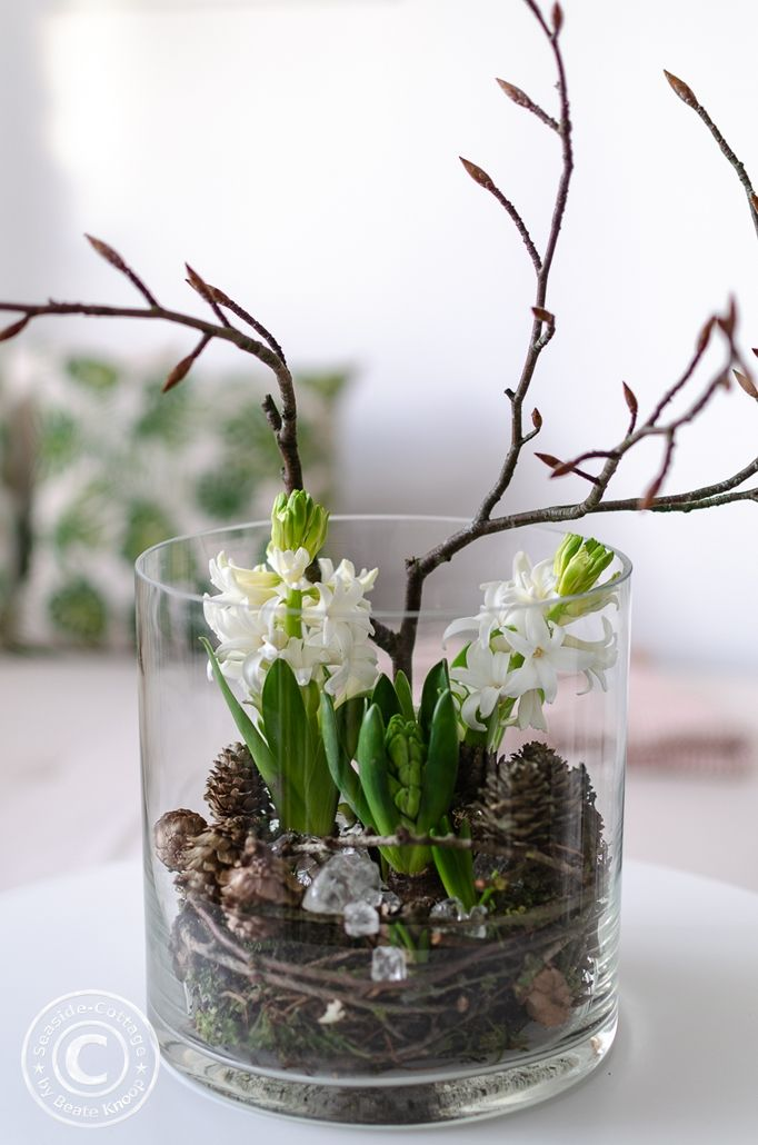 Photo of White hyacinths decorated in a glass with cones, branches and broken glass