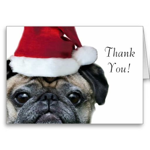 Thank You Christmas Pug Greeting Card Zazzle Com Dog Christmas